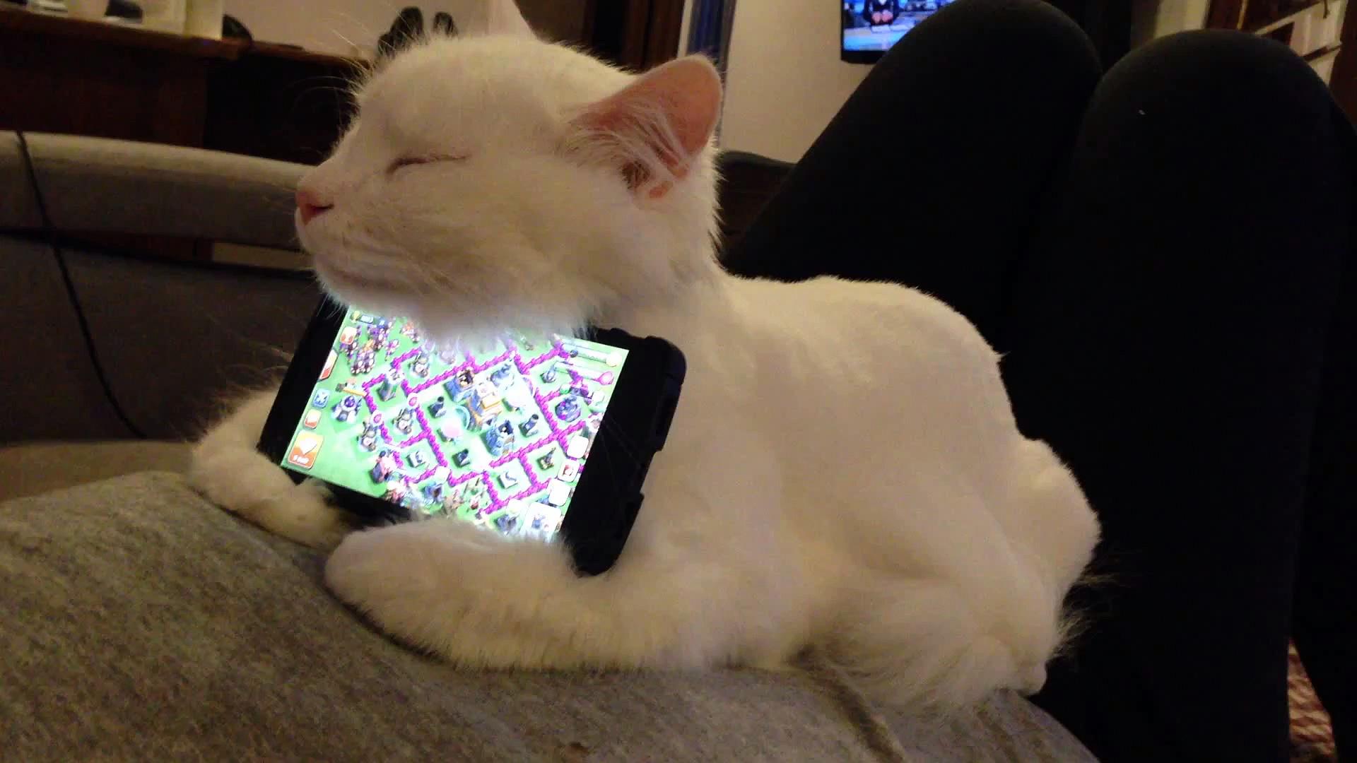 Ce chat sert de support de téléphone!