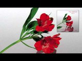 Simon Scott - For Martha 'Pop Ambient 2012' Album