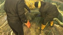Angry sea lion got in fishing net - Sea Lion Fights Boat Crew