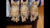 Funny Cat Videos 2014  - Komik Kedi Videoları 2014