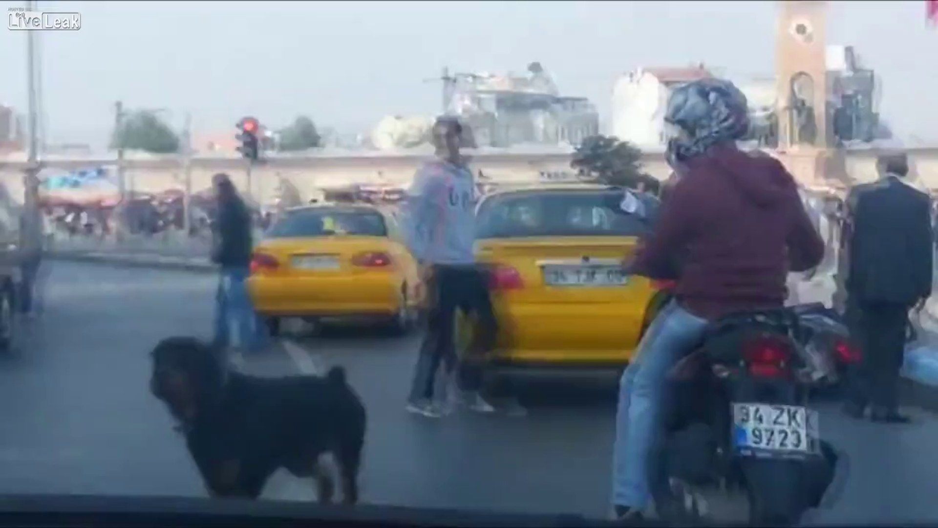 Dunya News - Dog splits up a fight