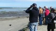 Patagonie argentine: les éléphants de mer veillent sur leur clan