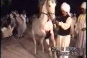 Prince Malik Ata with dancing horse at Kharian pakistan