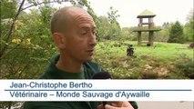 Festival de naissances au Monde Sauvage d'Aywaille