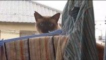 Un chat rate complètement son saut