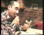 Un chat communique avec son maître pour manger