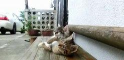 Un chaton essaie de réveiller un autre chaton