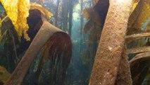 L'acoustique au service des écosystèmes sous-marins