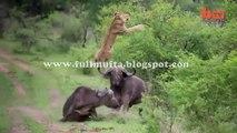amazing clip by www.fullmufta.blogspot.com (117)