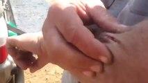 Bille de paintball dans le bras