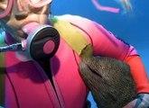 Une plongeuse fait des calins a une murène