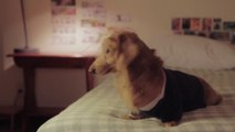 Hilarious Dawson's creek parody with dogs : Dachshund's Creek