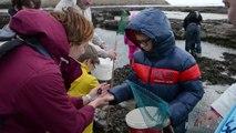 A la découverte de l'estran rocheux de Port-en-Bessin