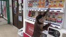 Drole de Singe intelligent, super a Voir !!!!!  super monkey