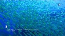 Festival mondial de l'image sous-marine (bande annonce)