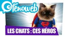 Les Chats : Ces Héros !!