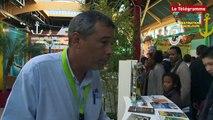 Route du Rhum - Destination Guadeloupe. La Guadeloupe s'invite à Saint-Malo