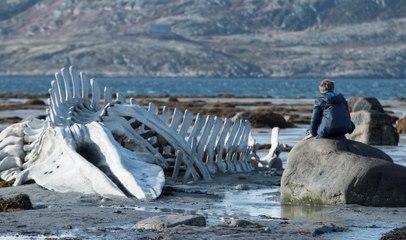 Leviathan - Türkçe altyazılı fragman