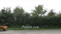 Poulet cru - L'Affût (humour)