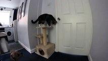 Un chat ouvre la porte pour un chien