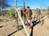 Quand un lion se jette sur un homme... pour lui faire un câlin