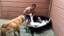 Ce chien prend son pied dans son bain