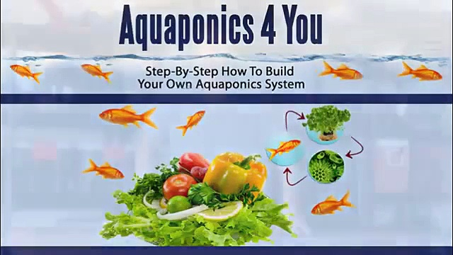 Aquaponics 4 You   Step By Step How To Build Your Own Aquaponics System