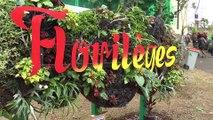 Florilèges 2014 : Le Mur Végétal
