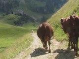 Aperçu : Ça, c'est(une) vache!