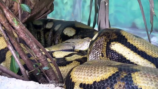 10 Mind-Blowing Facts About Snakes