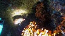 Marseille : grand succès pour les récifs artificiels