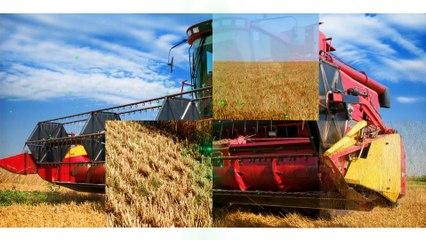 AgroWorld-TR