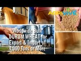 Buy Bulk Durum Wheat for Export, Durum Wheat Exporter, Durum Wheat Exports, Durum Wheat Exporting, Durum Wheat Exporters