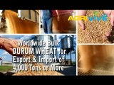Purchase Bulk Durum Wheat for Export, Durum Wheat Exporting, Durum Wheat Exporters, Durum Wheat Exporter, Durum Wheat Exports