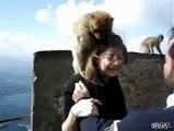 Monkey Crazy Fun With Girls . lol -