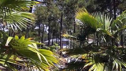 Camping Airotel Océan - Lacanau - Camping Gironde