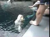 Requin baleine dans l'aquarium d'Altanta