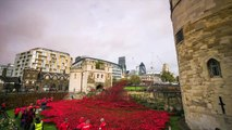 Tower of London Poppies 4k Timelapse: 888,246