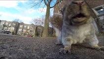 Un écureuil vole une GoPro, l'emmène dans son arbre et la laisse tomber d'en haut!