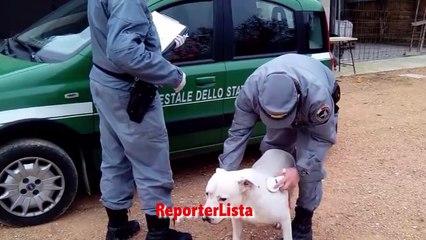 Sgominata banda che addestrava cani a combattere contro cinghiali