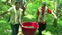 Pérou : 500 tortues d'Amazonie retrouvent leur habitat naturel