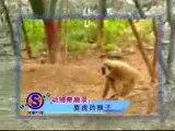 Macaco Sem Amor À Vida