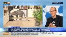 Culture Geek: Collier GPS, gamelle connectée: des nouvelles technologies pour les animaux - 24/11