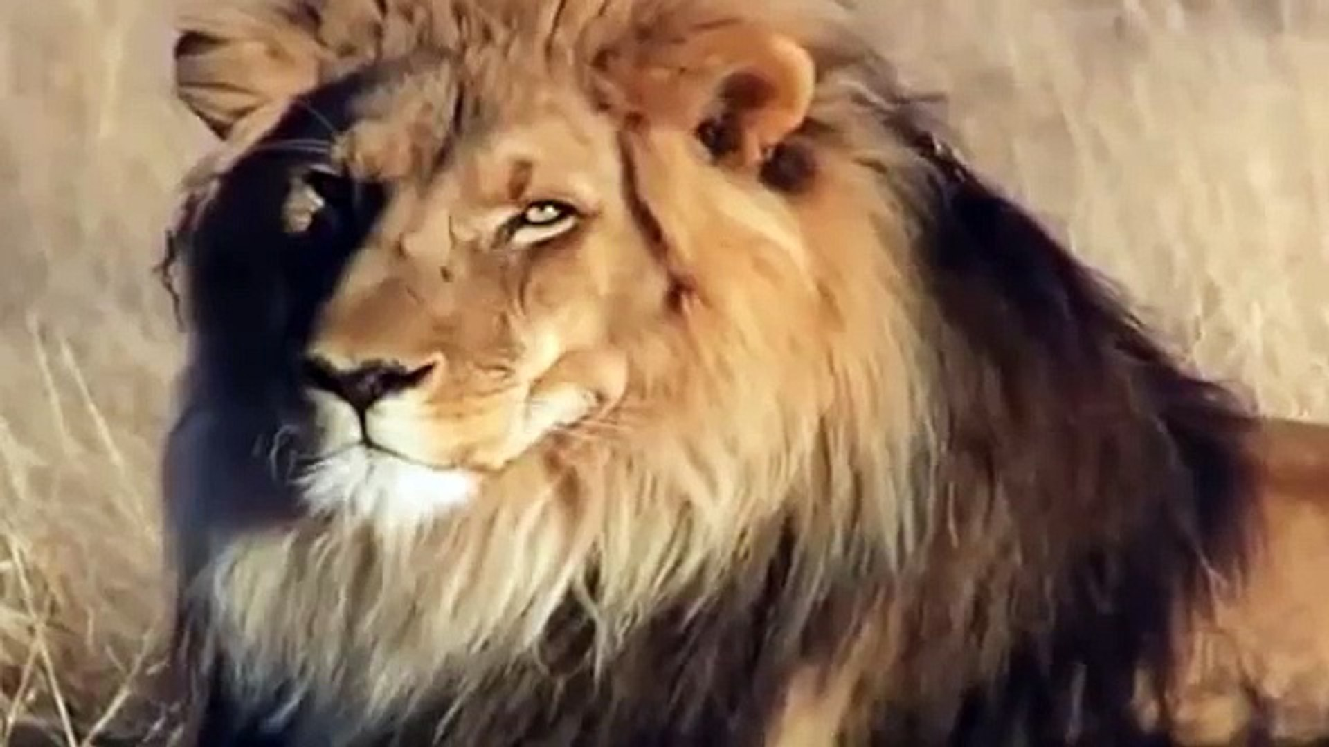 Lions Killing in a Volcano Crater Lions Documentary Discovery Channel new HD full documentary