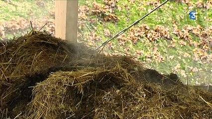 Méthanisation: des cornichons pour chauffer les éléphants du zoo de Beauval