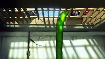 Larva Funny - Ep 9  Insectivorous Plants