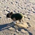 La gamelle d'un chien sur le sable au ralentis