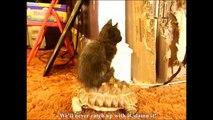 Le chat de Dark Vador (DARTH VADER'S CAT)