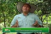 24 de noviembre de 2014 Segunda Prueba de desempeño de hembras en pastoreo GANASAL Web