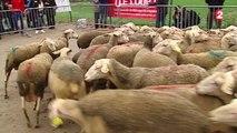 Les bergers manifestent contre la prolifération du loup en France